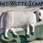 witte-schaap