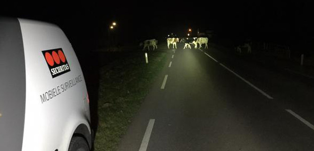 2014-dec-koeien_rik-westerbaan