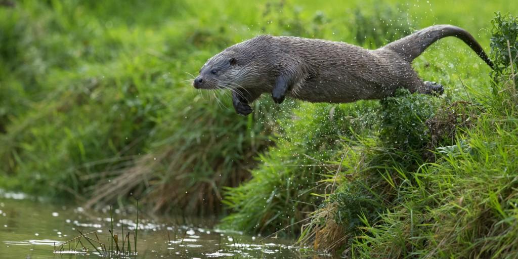 springende-otter-bescherm-mij-2000x1000