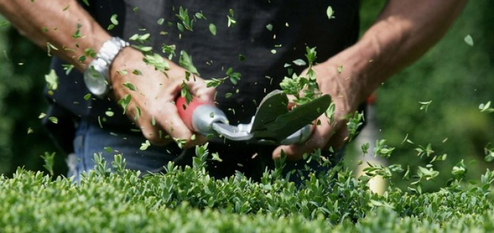 groen-onderhoud